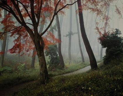 霧たちこめる大仏殿への小径