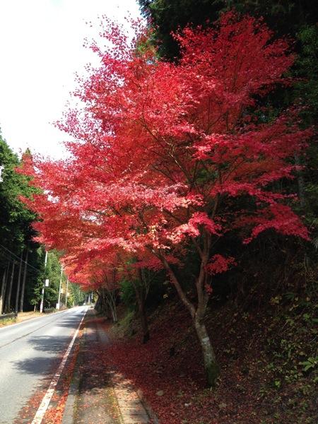 みたらい渓谷紅葉